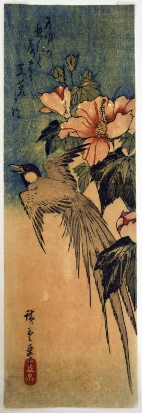 Long-tailed Bird and Hibiscus (Fuyō ni Tori)